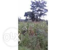 20acres of millo land with a title on sale in semuto each is at 8m