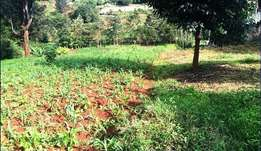 Rimpa 1/8 acre plots for sale