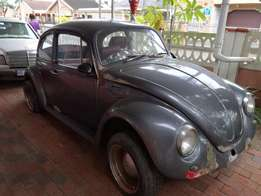 Beetle. ontrack media & functions