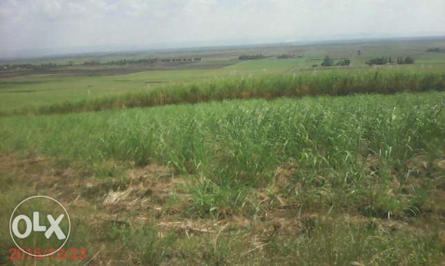 Land for sale in kibos kisumu Kisumu CBD - image 1