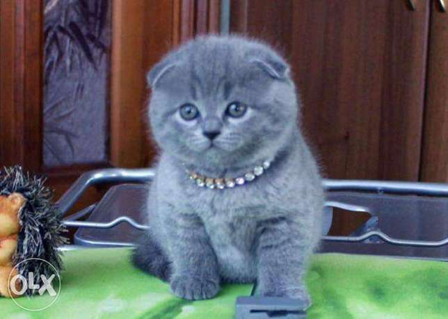 Cats For Sale In Lebanon Olx Online Classifieds
