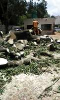 Tree Felling and Removal
