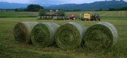 Alfalfa Hay,Teff Bale And Lucerne Bale For Sale