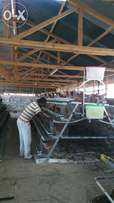 Battery cage system for 1000chicken