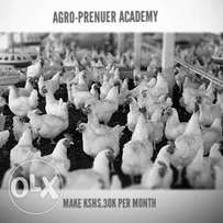 Make kshs.30,000 monthly broiler poultry farming course