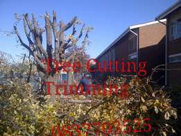 Boomsloping Tree Felling