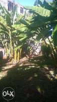 Ruaka Prime 1/8 Acre Plot 100 meters Off Limuru rd Available For Sale