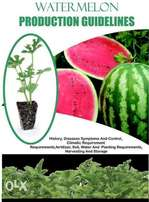 watermelon production guidelines