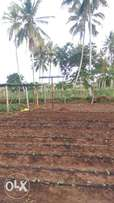 Irrigation systems and Solar pump Installation