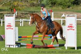 Tallented thb gelding for sale