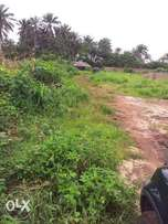 Multi-purpose Farm For Sale Urgently, at Ngor-okpala LGA, Imo State