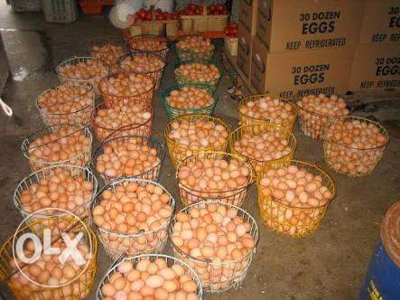 Crate of eggs Ifo - image 1