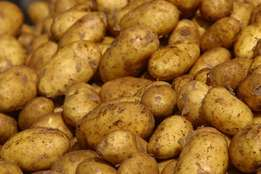 grade A potatoes for large and retail
