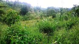 21 acres of land for sale in Butunduzi, Kyenjojo at 59 millions.