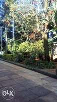 Half acre plot with buildings for sale in westlands