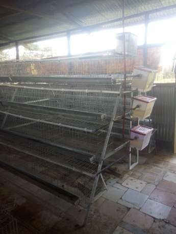 Homestead farm cages.capacity 1000 with free installation. Kasarani - image 2