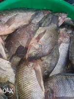 Fresh tilapia from Lake Victoria