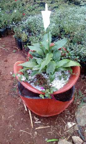 Flower pots and landscape designs Kiambu Town - image 4
