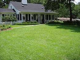 all types of natural grass for lawns at asepsis ltd stores