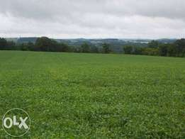 Land for sell next to galaxy academy bomet chebole road