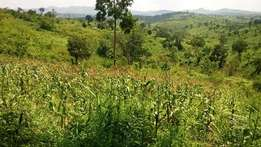5 acres of land for sale in Rweitengya, Kyenjojo at only 16 millions