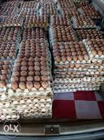 Wholesale Eggs