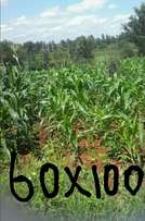 Plots for sale at kenol