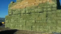 Top Quality Bales of Lucerne Hay Grade A