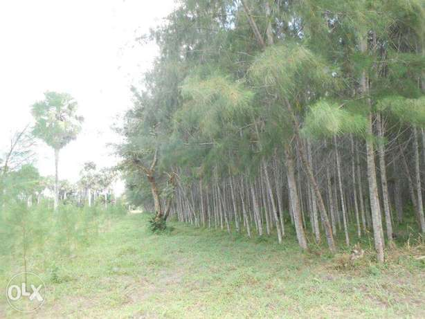 11 acres with casuarinas trees,msambweni Kwale - image 3