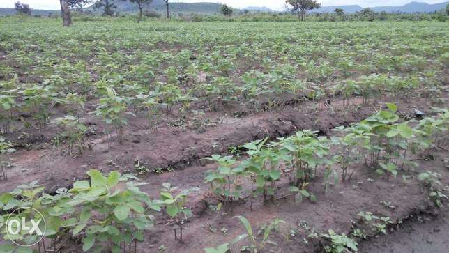 You want to invest in farm or own your own farm? Abuja - image 1