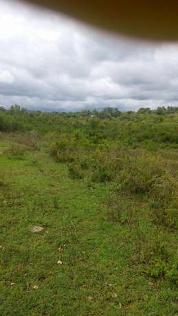 Agricultural Land for Sale Ideal for Mangoes and Oranges Farming Mananja - image 4