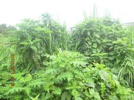 An acre of land in kiira at 230m