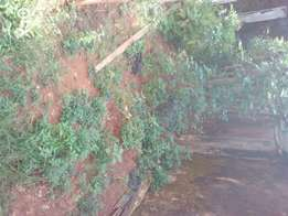 A 100 by 100 (12 plots) for sale in Benin city Edo state.