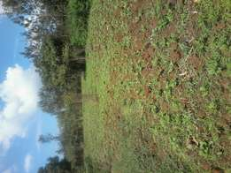 1 acre at makuyu, 3.5kms off tarmac. Redsoil.
