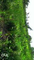 A plot of land for sale at Abulo Ado Festac extension