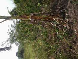 Am selling 8 acres of land in lulyambuzi luweero