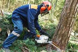 Experience In Cutting Tree Service