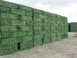 Top Quality Lucerne Hay Bales Grade A