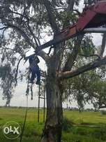 Tree felling/boom sloping nd removal