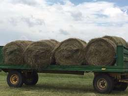 Grass Bales for sale