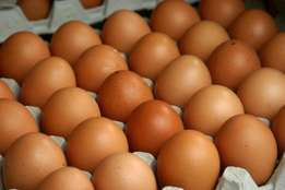 Egg Laying Hens in Gauteng - Collect at Depot near you