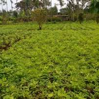 1/2 acre land at Kithoka - Meru.