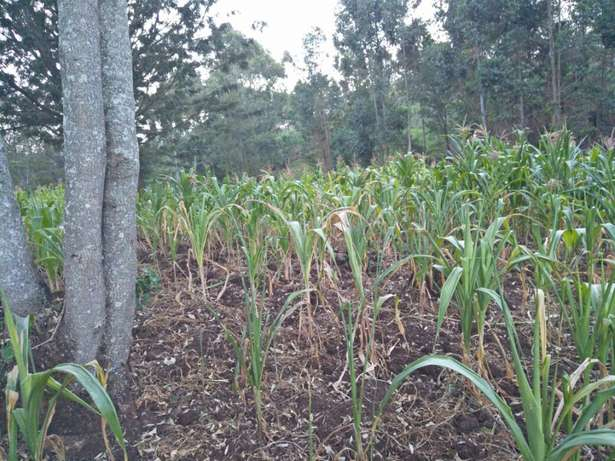 Land in Matasya Ngong, 8 Acres for sale Parklands - image 3