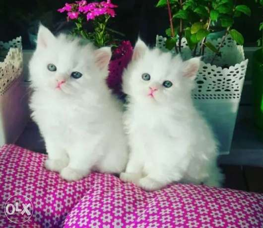 Pure cats