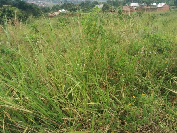 A u tired of renting and u want to cheap plot with landtittle on table Kampala - image 4