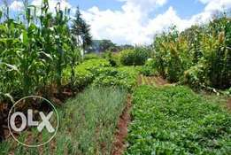 A large farm barely 10km from Kitale town.