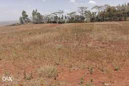 Half acre residential plots for sale in Kibiko Baboon Crescent Road
