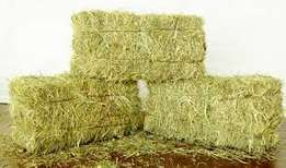 Hay Bales at 260 , 300 inclussive transportation