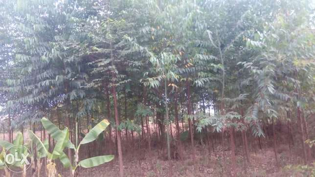 1 Acre land FOR SALE With a THREE bedroom house in Trans-Nzoia County Sinyerere - image 4