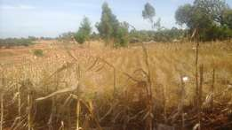 1/2 arce for sale at maili nne estate 200 metres from Uganda road eld